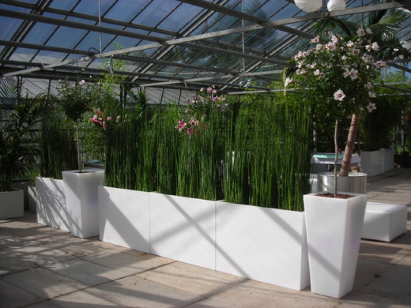 schachtelhalm equisetum wasserbambus in raumteiler. Black Bedroom Furniture Sets. Home Design Ideas