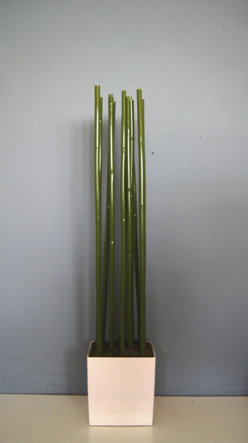 Bambus Raumtrenner Grünpflanzen Dekorationspflanzendeko Mieten